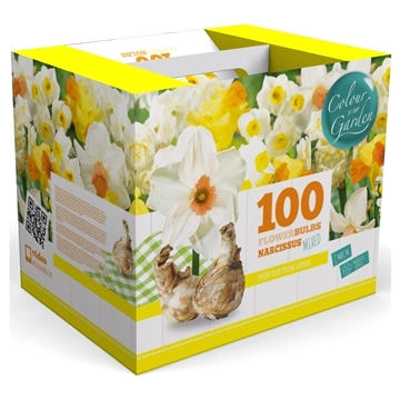 2 m2 Spring Colours Daffodils Mix
