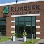 Rijnbeek Excellent Plant