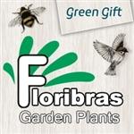 Floribras Garden Plants