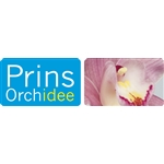 Prins Orchidee