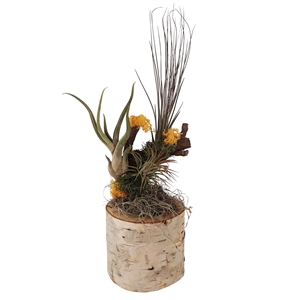 Tillandsia decoratie pot geel