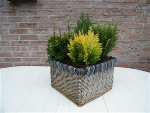 plant bakken 001
