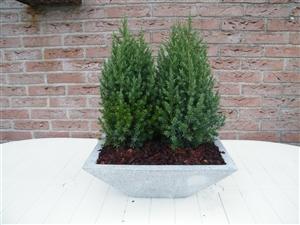 plant bakken 004