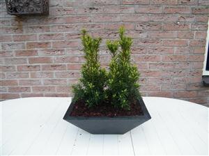 plant bakken 008