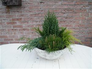 plant bakken 009
