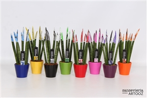 Sansevieria 8,5 cm Artooz Mix  in Ceramic Voor en Achter