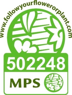 Vignet MPS-A+
