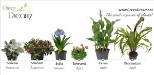 planning tuinplanten