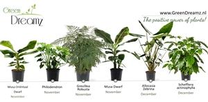 planning groene planten1