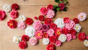 Camellia Winter Flower Festival 01
