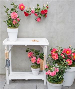 Camellia Winter Flower Festival