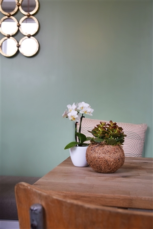 cactus orchid   kopie