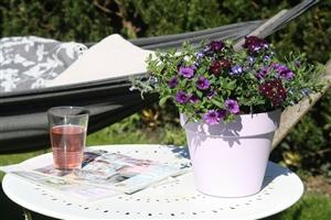 BJ (paars) in lila pot sfeer