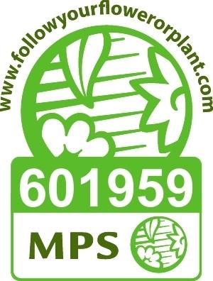 MPS logo Engels