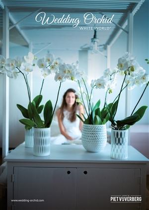 Poster weddingorchid