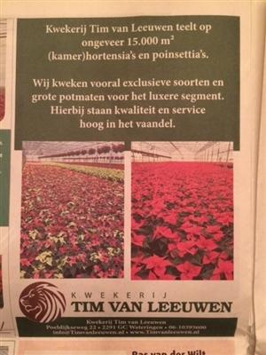 advertentie bloemenkrant