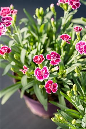 plantcare planten 003