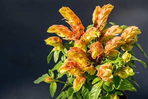 plantcare planten 007