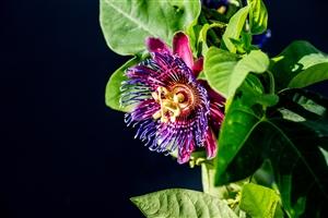 plantcare planten 010