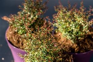 plantcare planten 013