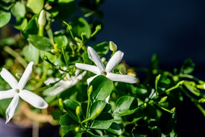 plantcare planten 017