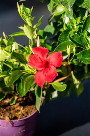 plantcare planten 020