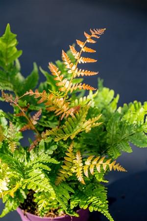 plantcare planten 033