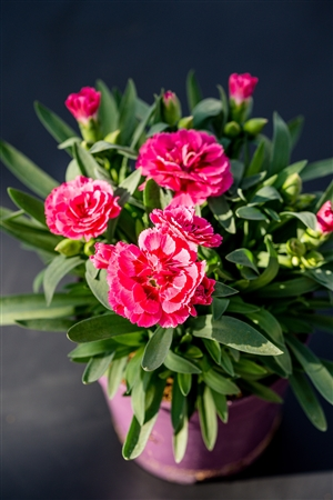 plantcare planten 054