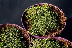 plantcare planten 025