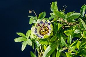 plantcare planten 011