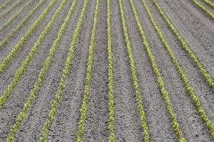 Onze vollegrond velden (3)