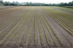 Onze vollegrond velden (2)