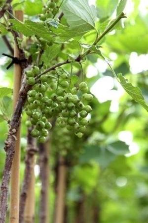 Bloemen en vruchten (1)