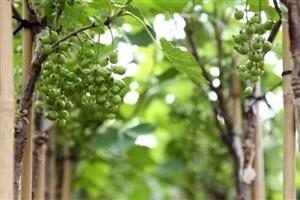 Bloemen en vruchten (8)