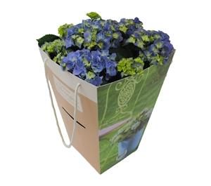 Hortensia outdoor blauw 21 cm incl. kadotas Van den Berg Est