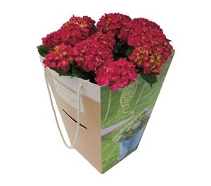 Hortensia outdoor rood 21 cm incl. kadotas Van den Berg Est
