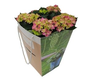 Hortensia outdoor roze 21 cm incl. kadotas Van den Berg Est