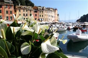Portofino Fiori