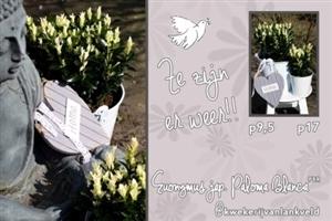mailing paloma blanca webformaat