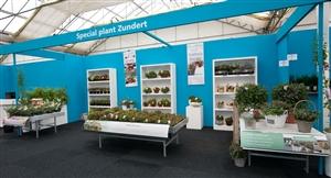 Plantarium2014 stand Special plant Zundert 7643