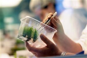 Oprins Plant NV 060820 04%20weefselkweek