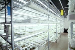 Oprins Plant NV 060820 10%20weefselkweek
