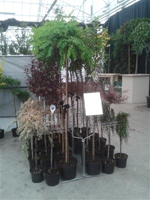 Presentatie plantenrek