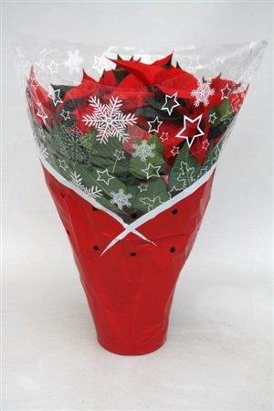Poinsettia red 17cm in bedrukte hoes