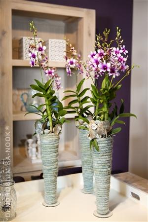 Dendrobium Sa nook Arrangement 007