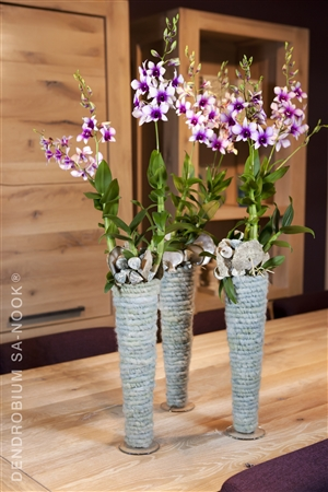 Dendrobium Sa nook Arrangement 009