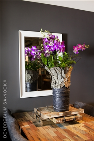 Dendrobium Sa nook Arrangement 013