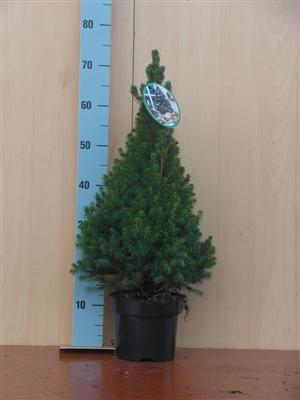Conica 70 cm