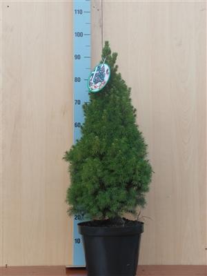 Conica 90 cm