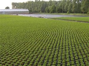 uitplant1